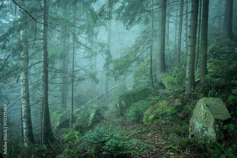 beautiful green landscape of misty wood