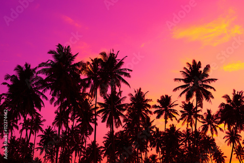 Spoed Fotobehang Roze Tropical palm trees silhouettes at sunset
