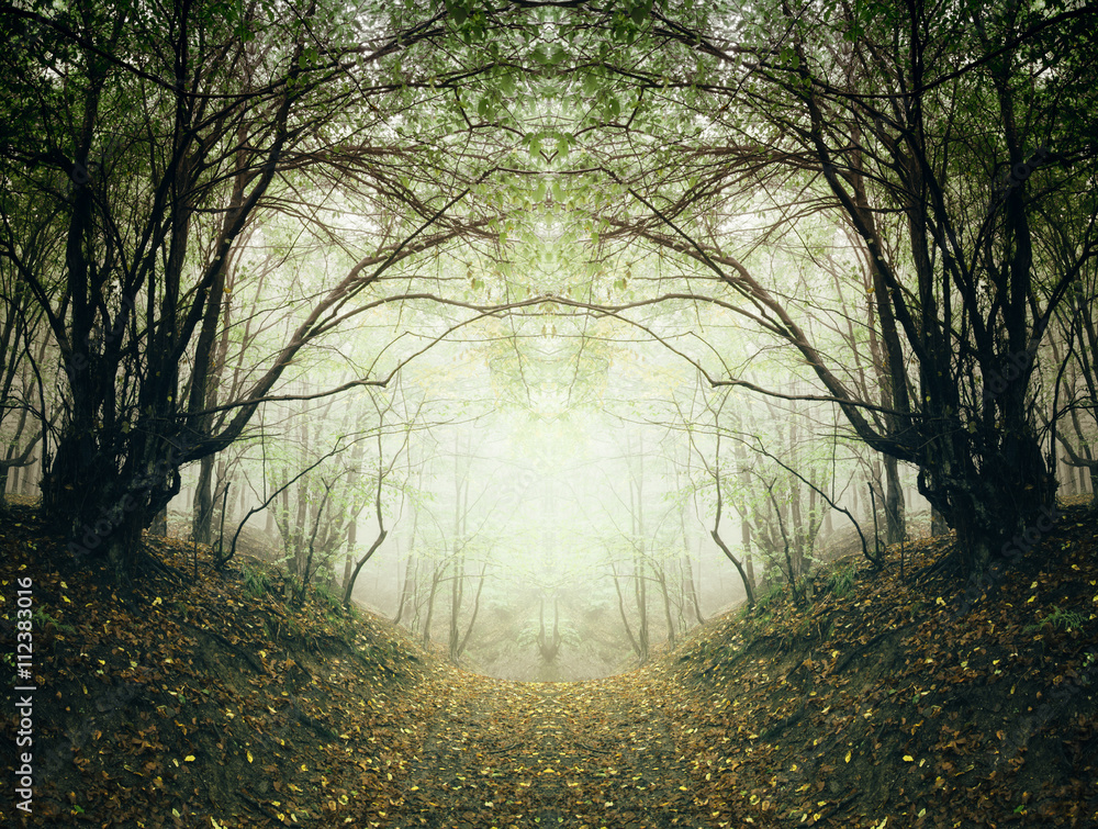 Fototapety, obrazy: surreal forest path
