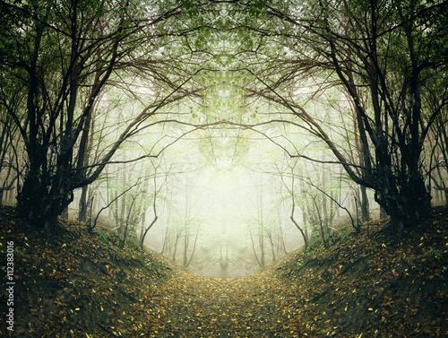 surrealistyczna-lesna-sciezka