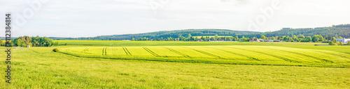 Foto op Plexiglas Groene Farmland panorama - wheat field