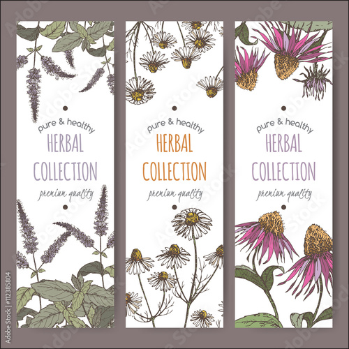 Three color vector herbal labels with peppermint, chamomile and echinacea Wall mural