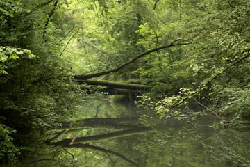 Foresta rigogliosa del parco Adda