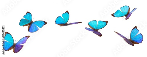 Poster Vlinder Blue flying butterflies.