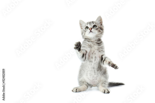 Beautiful cat isolated on white background Tableau sur Toile