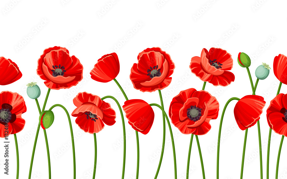 Fototapety, obrazy: Vector horizontal seamless background with red poppies on a white background.