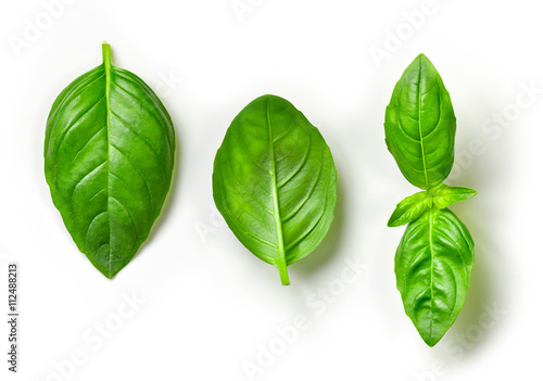 Canvastavla fresh green basil leaves