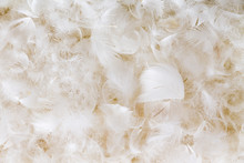 Light Fluffy White Feather Background Texture