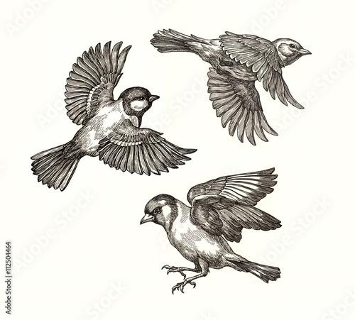 Valokuva  Три птицы в полёте, рисунок тушью. Синица, жаворонок, щегол.