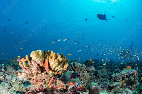 Maldives corals house for Fishes underwater view Fototapeta