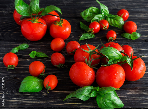 Fototapety, obrazy: Tomatoes on vine and green basil