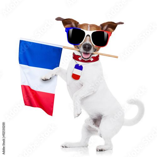 Fototapety, obrazy: soccer football dog