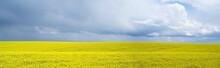 Rape Field, Podolia Region, Uk...