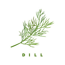 Dill Herb, Food Vector Illustration, Isolated Logo