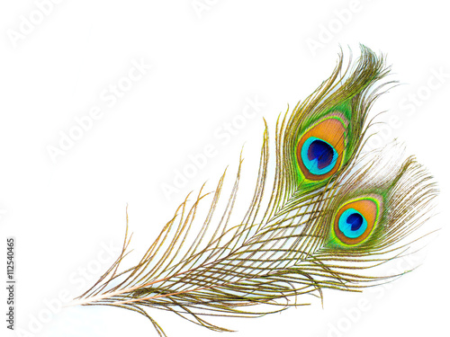 Photo sur Aluminium Paon colorful pattern on peacock feather isolated