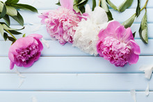 Beautiful Pink And White Peony Flowers On Blue Vintage Background With Copy Space For Your Text Or Design, Top View, Flat Lay