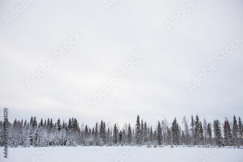 Photographie  Landschaft in Finnland