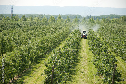 Obraz na płótnie spraying apple orchard in spring