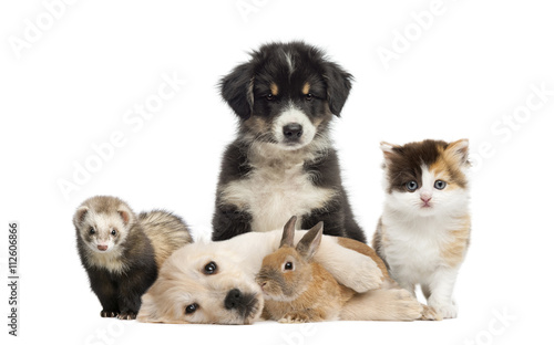 Group of young pets isolated on white © Eric Isselée