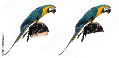 Foto op Aluminium Papegaai Blue-and-gold Macaw isolated on white