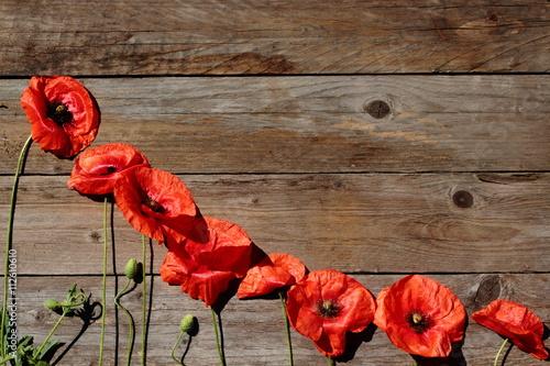 Fototapeta Czerwone maki na tle z drewna. obraz