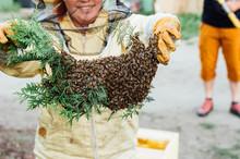 Pszczelarz Z Rojem Pszczół
