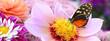 canvas print picture - Schmetterling 210