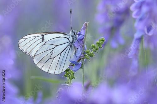 Obraz na plátně  Mariposa en primavera