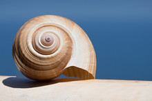 Large Sea Shell Swirl On A Whi...