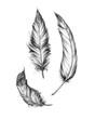 Leinwandbild Motiv Drei verschiedene Federn