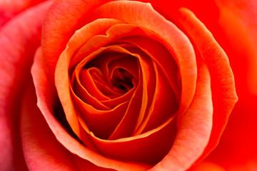 Obraz na Szkle Róże Rosenblüte