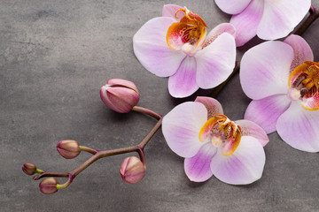 FototapetaSpa orchid theme objects on grey background.