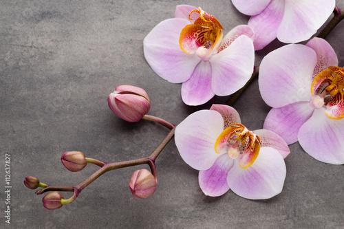 Poster  Spa Orchidee Thema Objekte auf grauem Hintergrund.