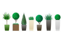 Set Of Decorative Plants In Pots Of Different Sizes And Colors In Vector Graphics