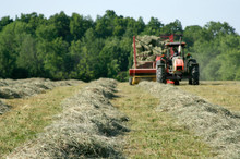 Freshly Baled Hay – A Tractor Pulls A Hay Baler And Wagon, Gathering The Tedded Windrows.