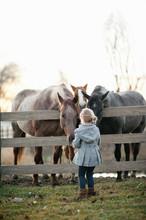 Young Girl Feeding Three Horses