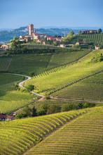 Panorama Of Piedmont Vineyards...