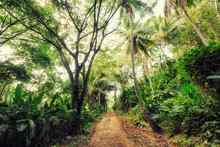 Scenic View Of Dirt Road Amidst Trees In Forest