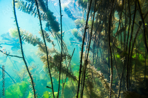 Foto auf Acrylglas Wald im Nebel Underwater river landscape