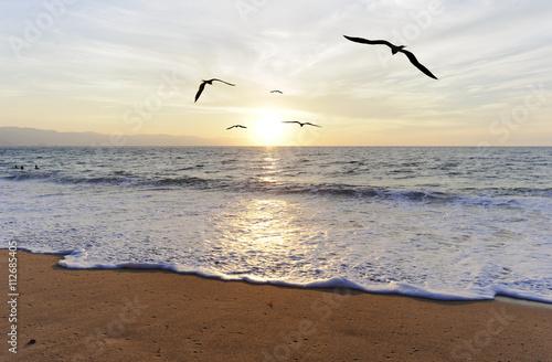 sylwetki-ptakow