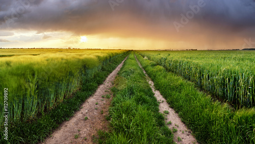 Spoed Foto op Canvas Natuur Field nature landscape at sunset with path