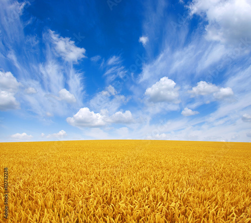 plakat wheat field and sky