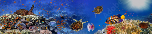 Photo Stands Dark blue Underwater panorama with turtle, coral reef and fishes