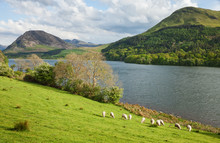 Spring Landscape In Lake District National Park, Cumbria, England, UK.   A Typical Lake District Scene.