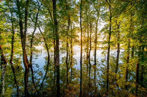 Reflection of tree in waterlogged forest - 112787212