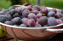 Hungarian Plums In Colander
