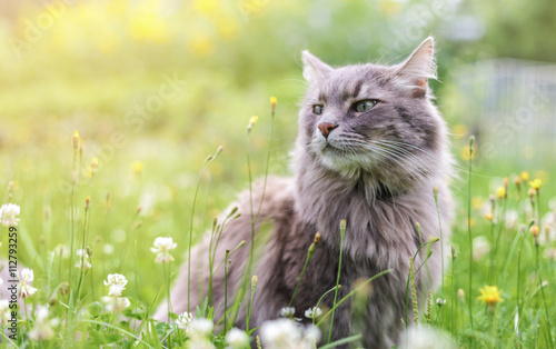Staande foto Kat Chewie the cat in the wild