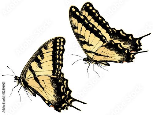 Valokuvatapetti Tiger Swallowtail Butterfly