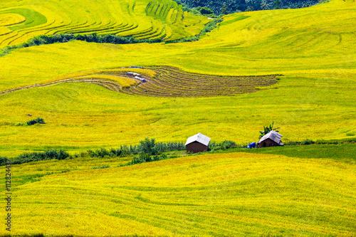 Photo  Terraced rice fields in Sapa, Lao Cai, Vietnam