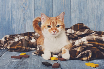 Fototapeta na wymiar Ginger cat lays on plaid blanket